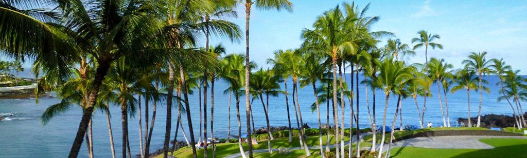 椰子の見えるビーチ
