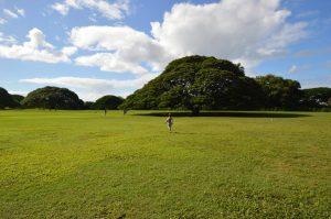 日立の「この木何の木、気になる木」が見れるモアナルアガーデンズ
