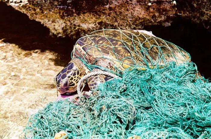 カイルアビーチの海洋ゴミ回収の話し