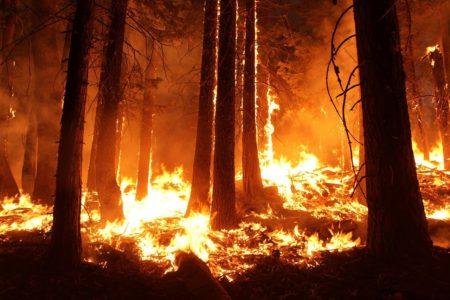 ハワイにおける 乾季の山火事の危険